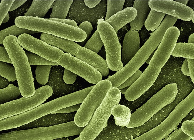 green elongated bacteria